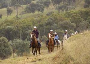 men in horses